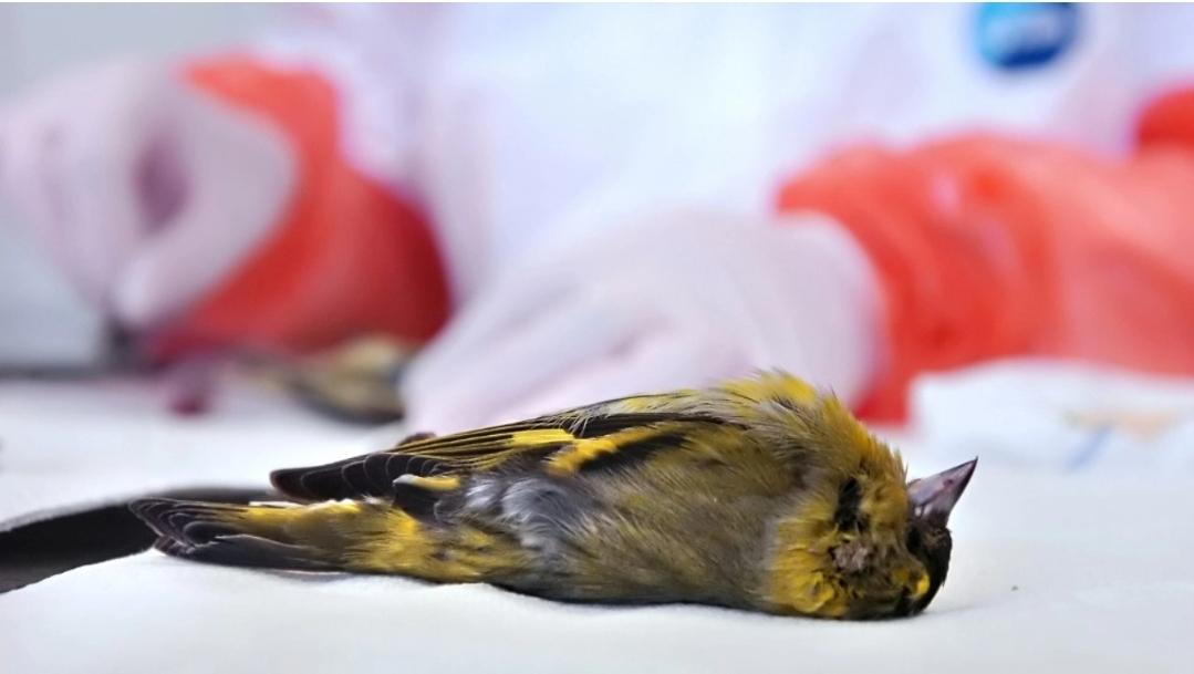 ตะลึง! นกนับแสนตัวตกลงมาตายปริศนา คาดไฟป่ามีเอี่ยว