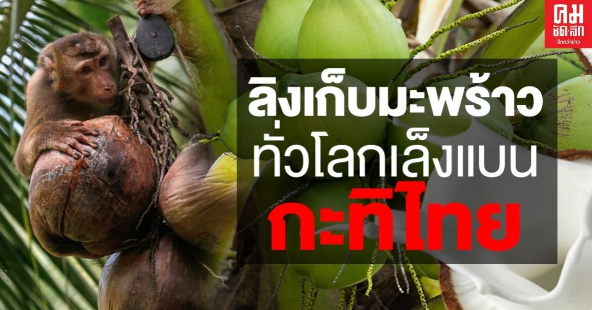 เปิดโปงกะทิ 2 แบรนด์คือ Aroy-D และ Chaokoh ที่ใช้แรงงานลิงอย่างโหดร้ายในการคัดมะพร้าวในประเทศไทย