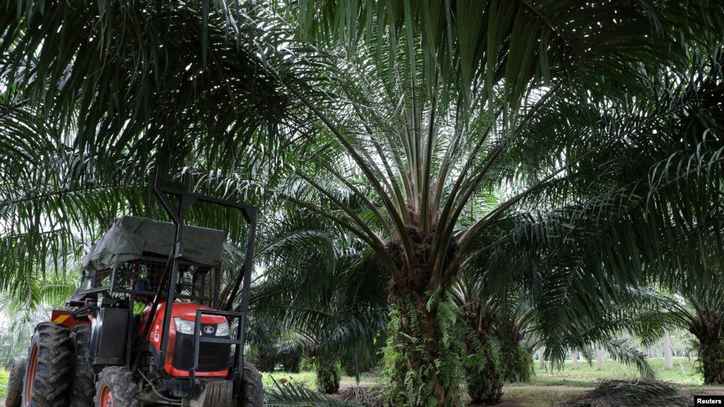 สหรัฐฯ สั่งห้ามนำเข้าน้ำมันปาล์มจากบริษัทมาเลเซีย กรณีบังคับใช้แรงงาน