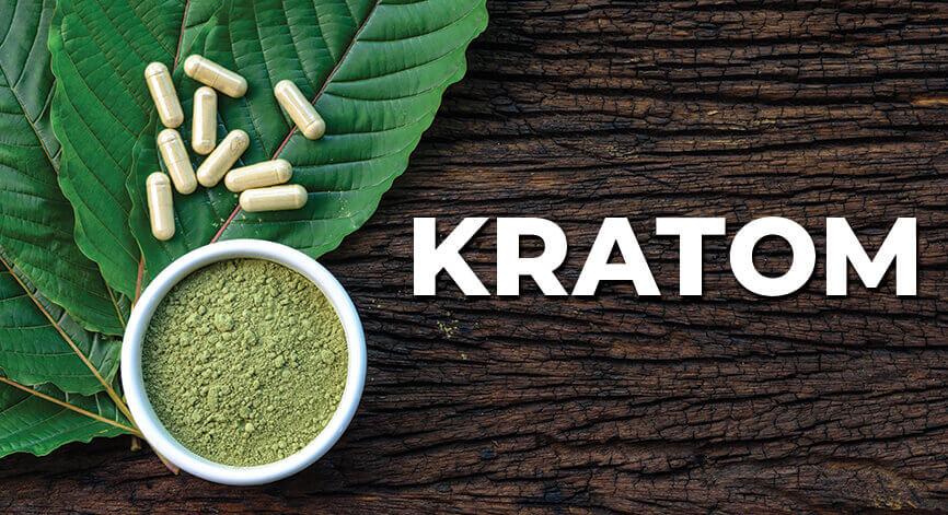 ประเทศไทยออกกฎหมาย กระท่อม kratom ยาแก้ปวดจากพืชยอดนิยม